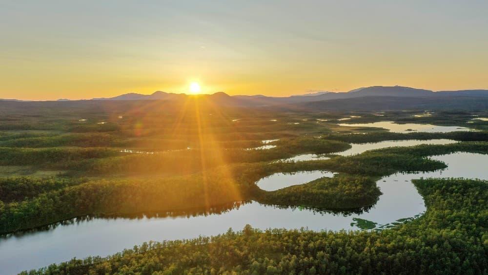 Svensk natur skog